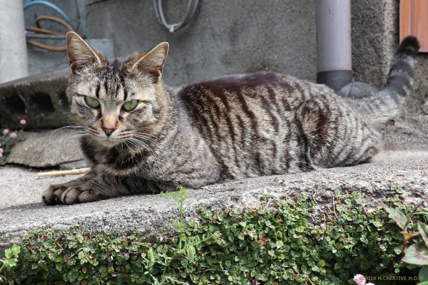Shimazo_18041603a