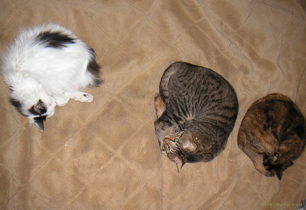 3cats_14010601a