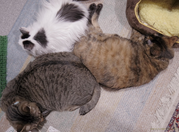 3cats_14011801a