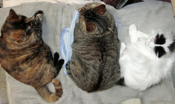 3cats_15071301a
