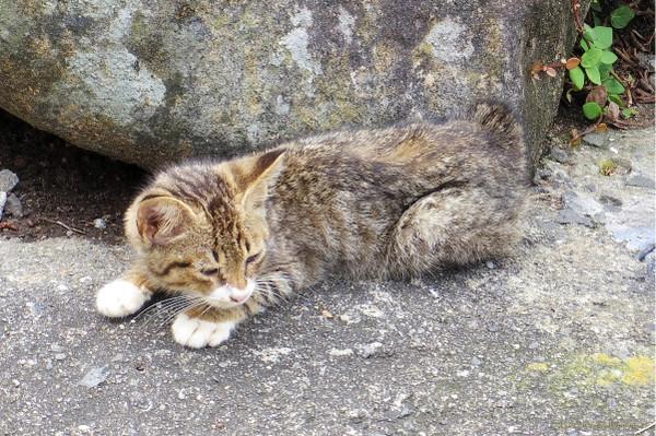 Kitten_14081601a