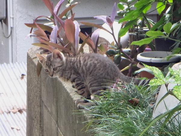Kitten_15070301a