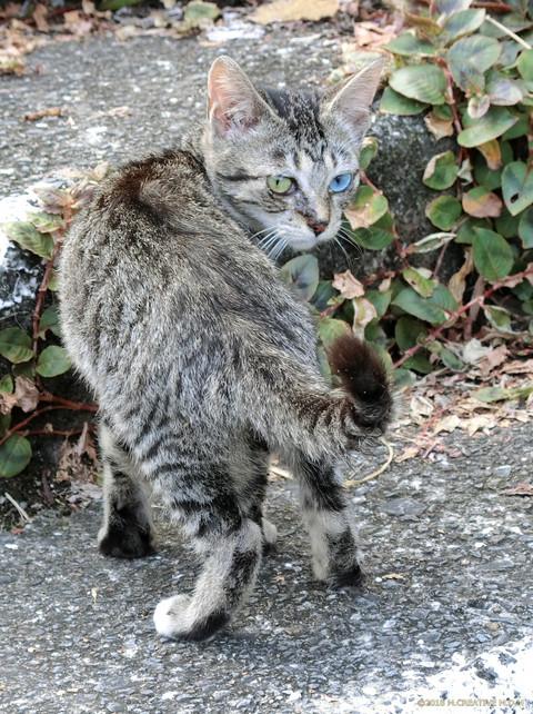 Kitten_16081501a
