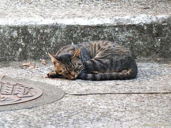 Shimanji_18080101a