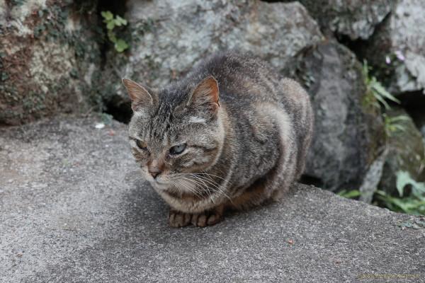 Oshima_18060101a