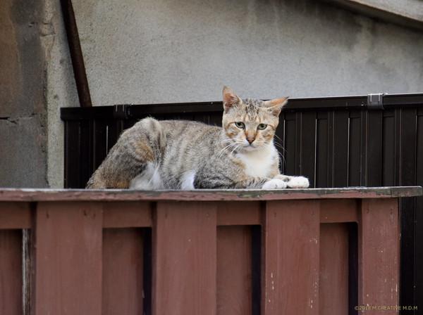 Shikko_18081701a