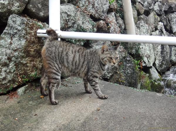 Oshima_18090101a