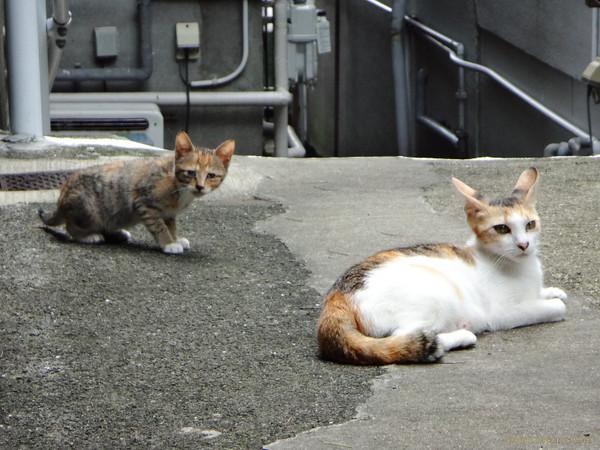 Kitten_15070302a