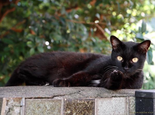 Shitsuji_18091505a