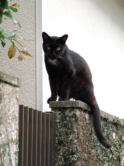 Shitsuji_18091507a