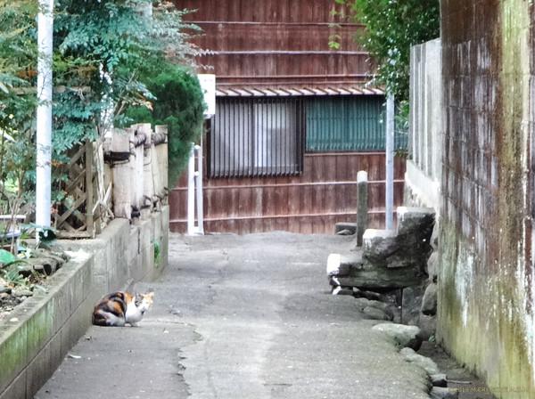 Fukiro_16021703a