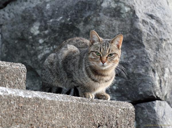 Mishima_18101401a