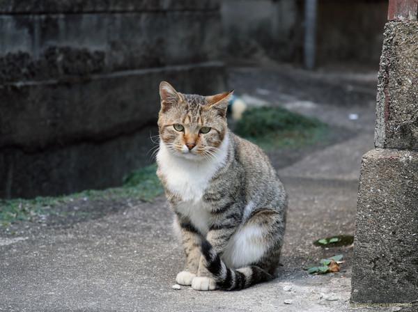 Shikko_18110401a