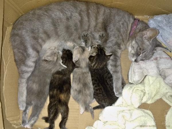Hassy_kitten_19071201a