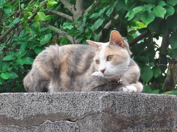 Momo_19070501a