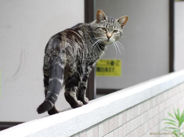 Shimane_19051402a