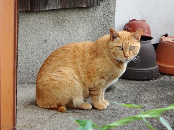 Tsubomi_19072201a