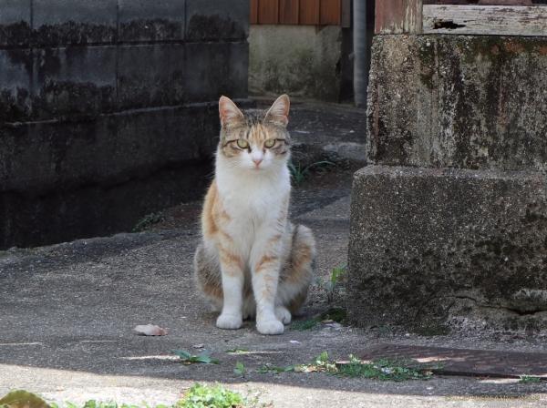 Akane_20041401a