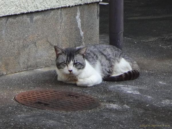 Fuji_19100801a