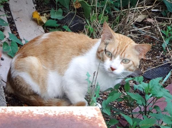 Ginger_19071401a