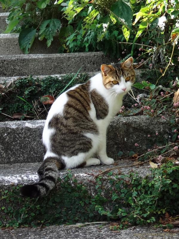 Jiro_20101901a