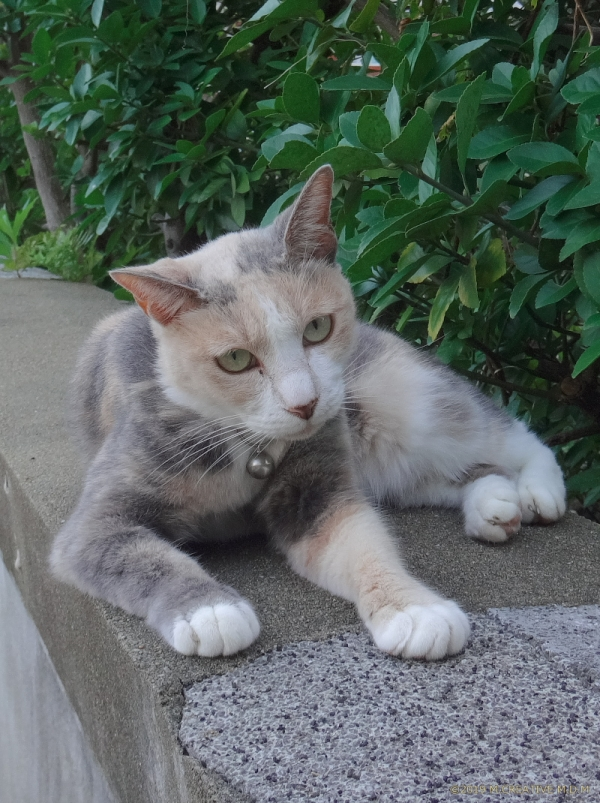 Momo_19091401a