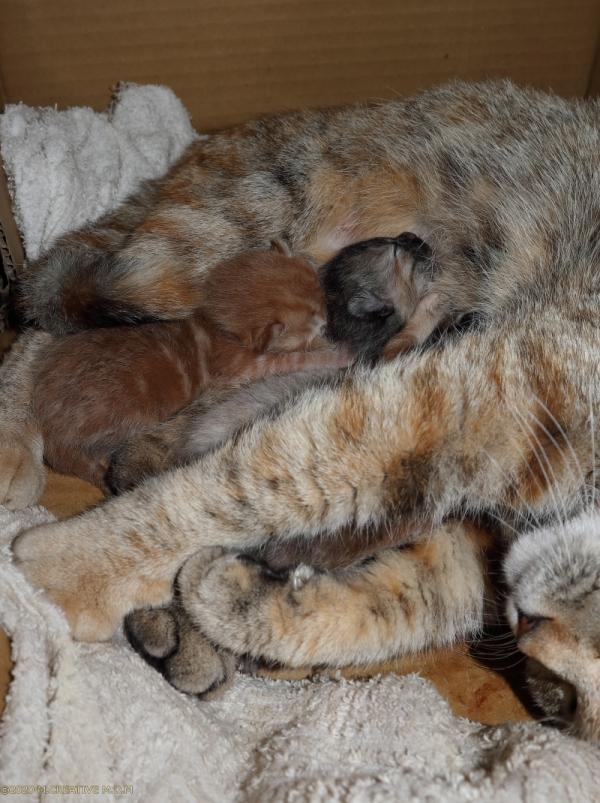 S_kitten_20033001a