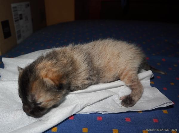 S_kitten_20033102a