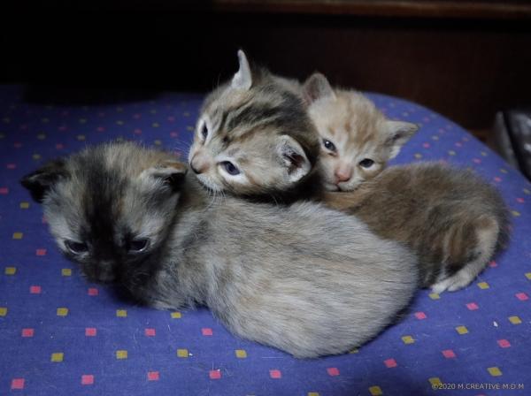 S_kitten_20041602a