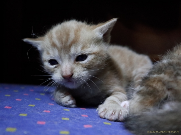 S_kitten_20041603a
