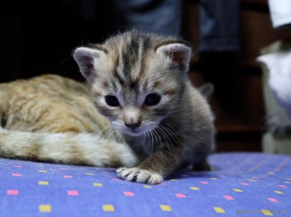 S_kitten_20041607a