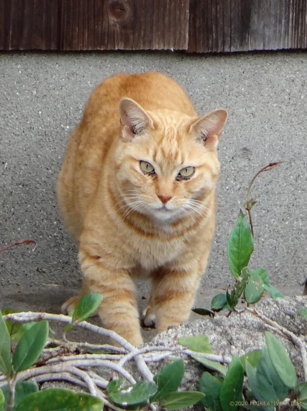 Tsubomi_20041701a
